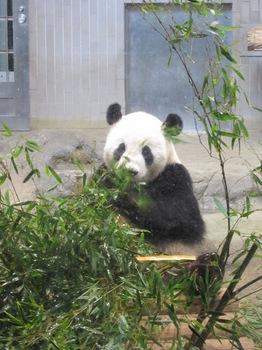 120818_Panda_1.jpg