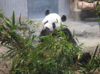 120818_Panda_2.jpg