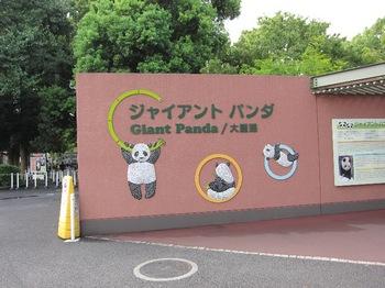120818_Panda_3.jpg