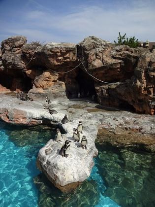 フンボルトペンギン (2).JPG